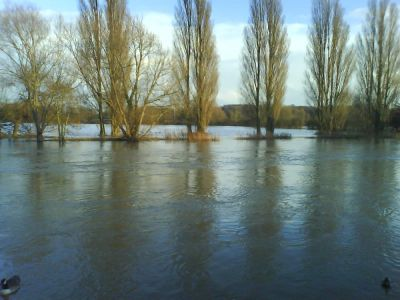 Poplars Opposite Wilsham Rd (getting used to being flooded)